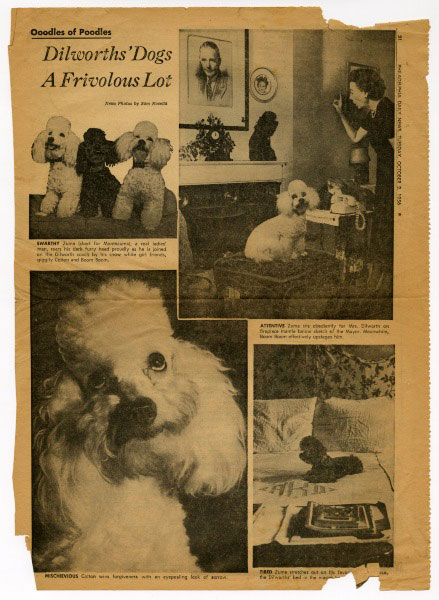 """Oodles of Poodles: Dilworth's Dogs A Frivolous Lot,"" from Philadelphia Daily News, October 2, 1956."